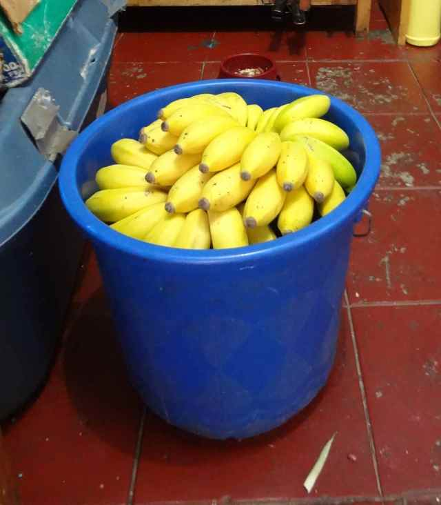 Delicious bananas brought as a gift